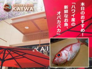 KAIWA☆本日のおすすめ★ハワイ産の新鮮なオパカパカ♪♪